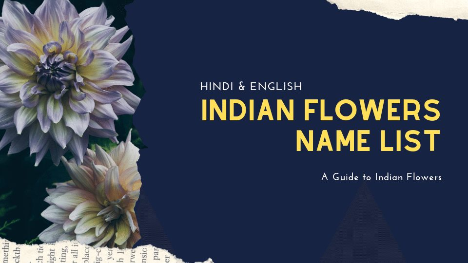Indian Flower Name List, Flowers