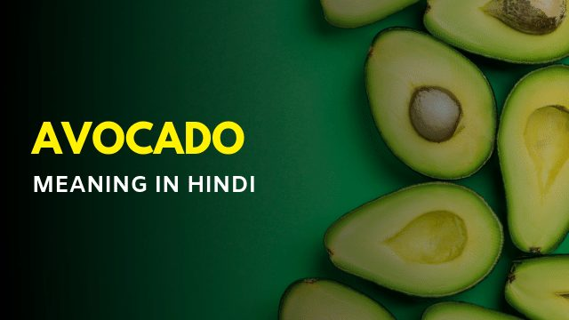 Avocado Meaning in Hindi