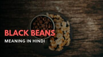 Black Beans Meaning in Hindi