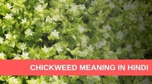 Chickweed Meaning