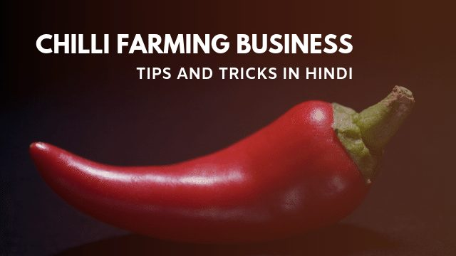 Chilli Farming Business in Hindi