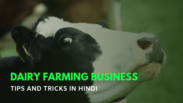 Dairy Farming Business Kaise Kare