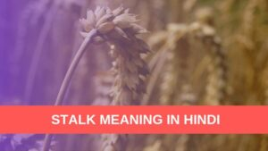 Stalk Meaning