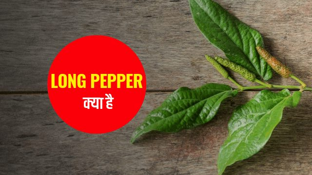 What is Long Pepper in Hindi