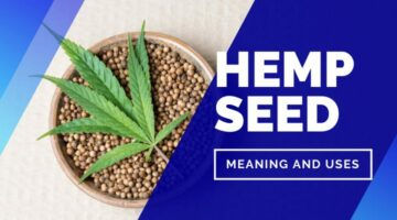 Kya Hai Hemp Seeds in Hindi