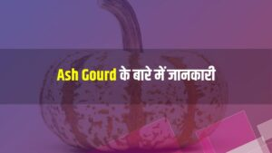Ash Gourd Meaning