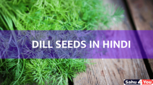 dill seeds in hindi